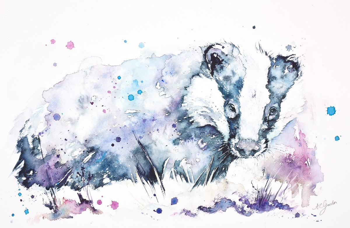 Evening Badger ~ Amanda Gordon