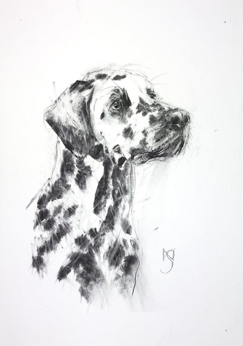 Dalmatian II ~ April Shepherd