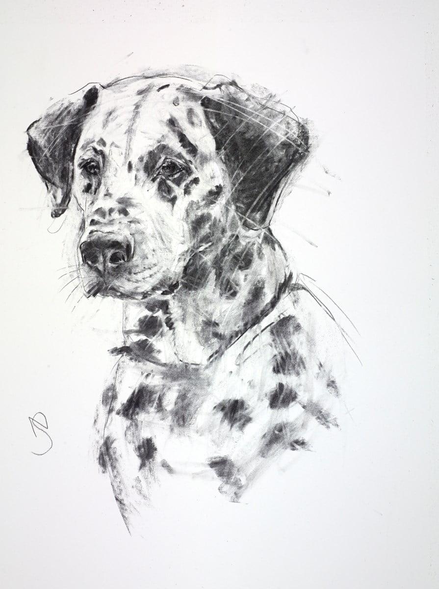 Dalmatian ~ April Shepherd