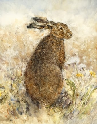 The curious hare ~ Gary Benfield