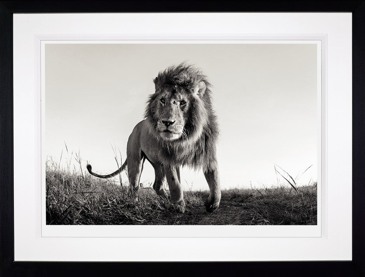 Hunter ~ Anup Shah